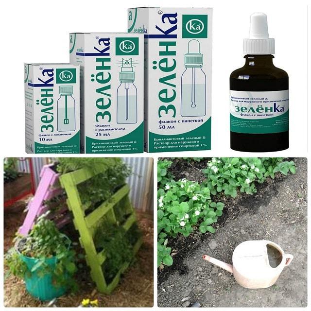 Как использовать зеленку в огороде и саду? Лечим болезни растений и культур