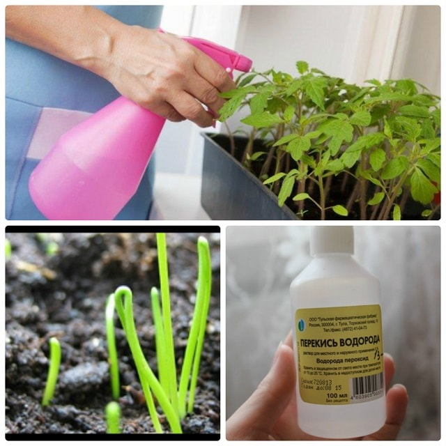 Применение перекиси водорода в саду и огороде